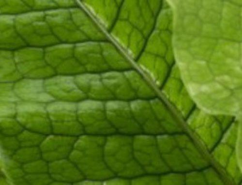 Een groene omgeving verandert je brein