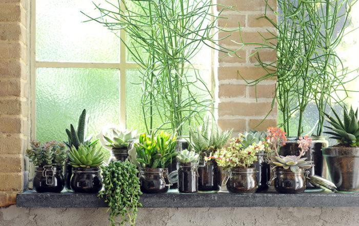 Plantjes op vensterbank