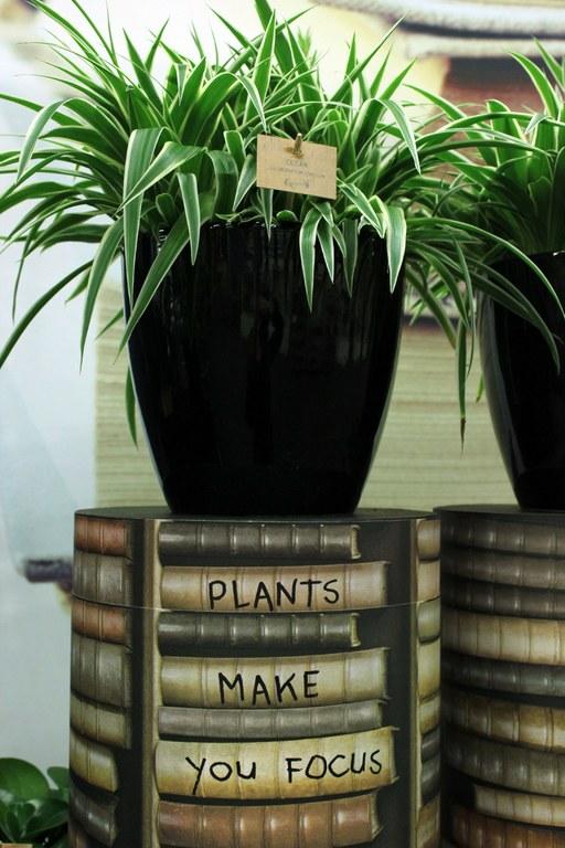 pot, plant