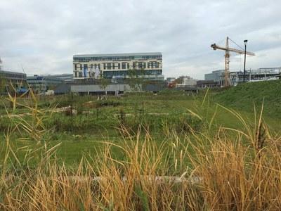 garden with big building on horizon