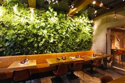 green wall in bar