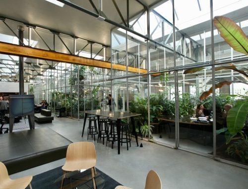 Genomineerd voor Interieurbeplanting van het Jaar 2017: Joolz in Amsterdam