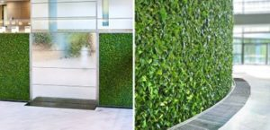 green wall in office