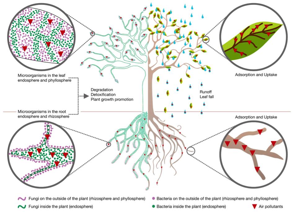 tree scheme