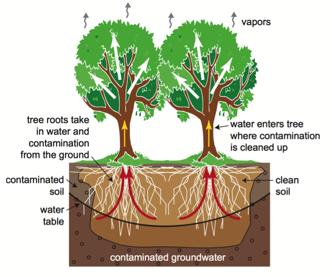 drawing trees cleaning water
