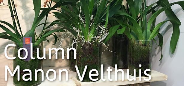 column Manon Velthuis