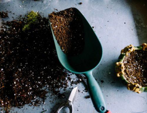 Hoe planten floreren: de voordelen van gezond bodemleven in potgrond