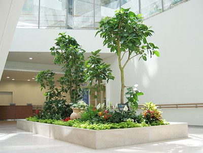 plants in building