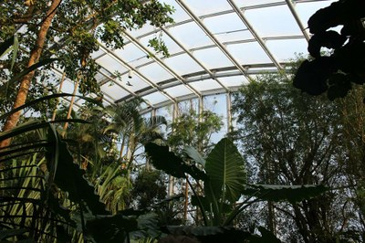 rainforest in greenhouse