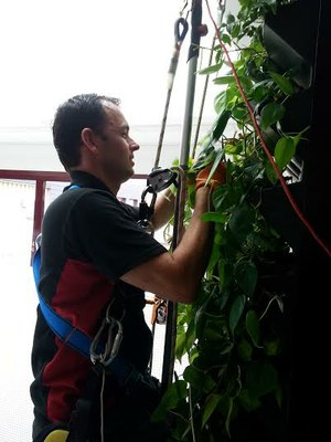 maintainance on high of green wall