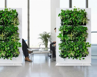 green walls in waiting room
