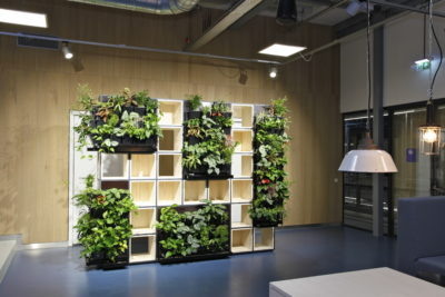 plants in shelves