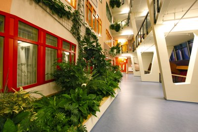 plants in hospital