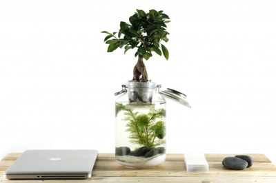 bonsai on top of wek with waterplant